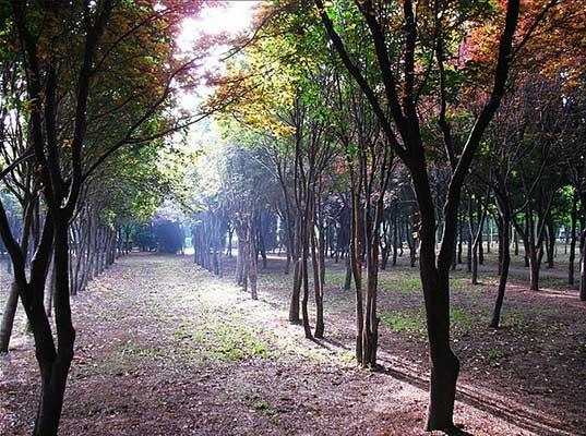 同题诗赛(49-2)《初春》《孕育》作品赏析【自由体诗】